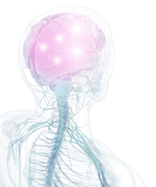 Image of translucent person with brain and nerves