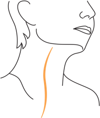 illustration of vagus nerve